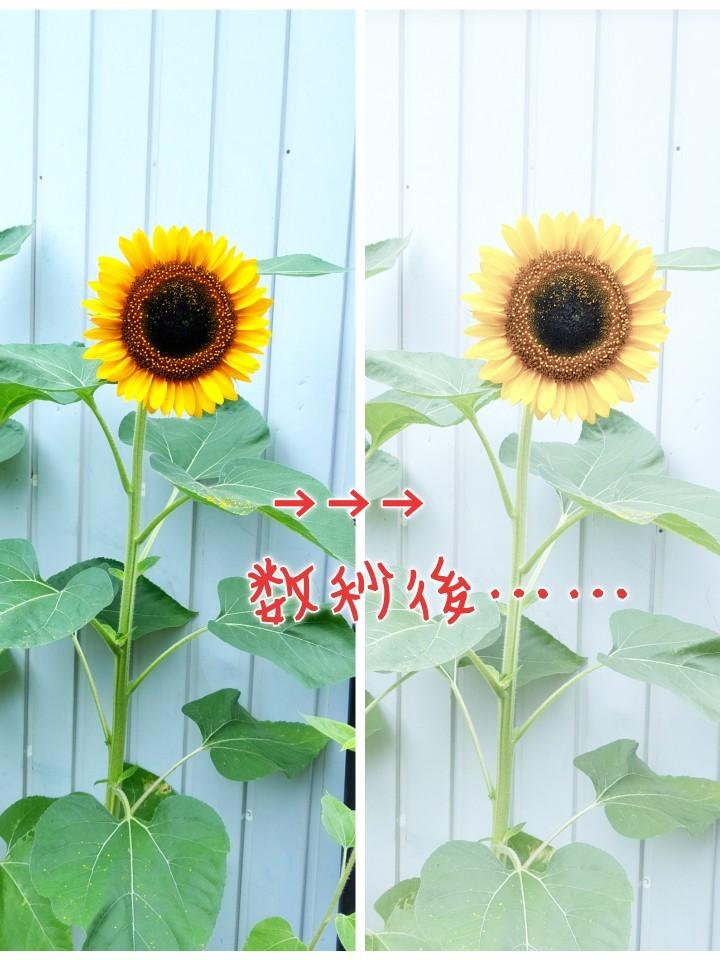 f:id:tumatupochiko:20190821163306j:plain