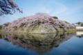 京都新聞写真コンテスト  古城の水鏡