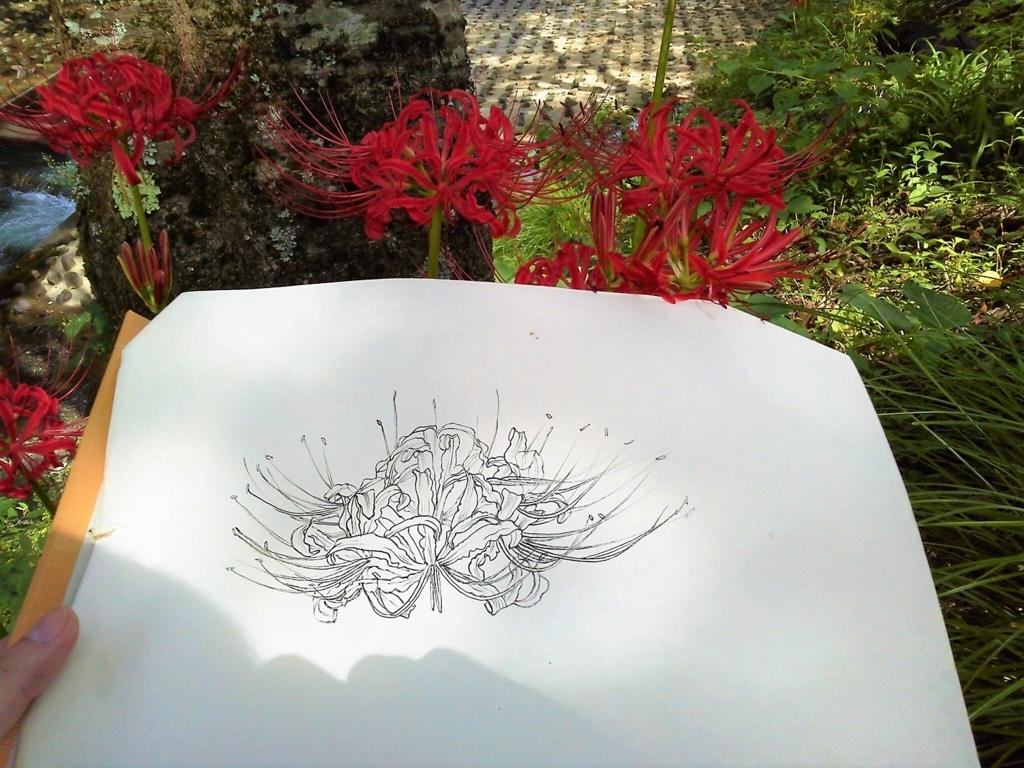 日本画におけるスケッチの方法 道具準備から描き方まで つらら庵日和 令和 お絵描き ハンドメイ道の巻