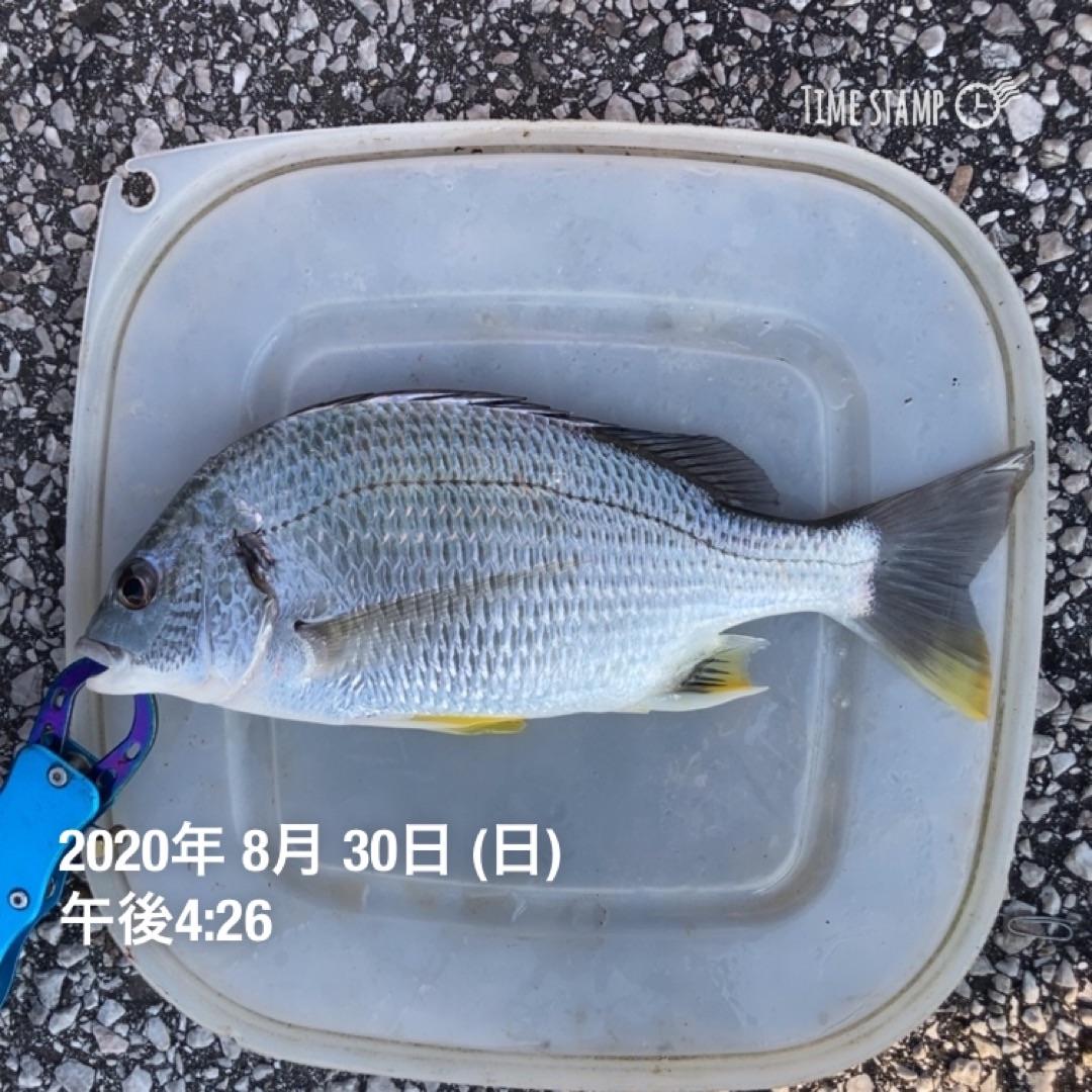 f:id:turikitikun1977:20200831075124j:image