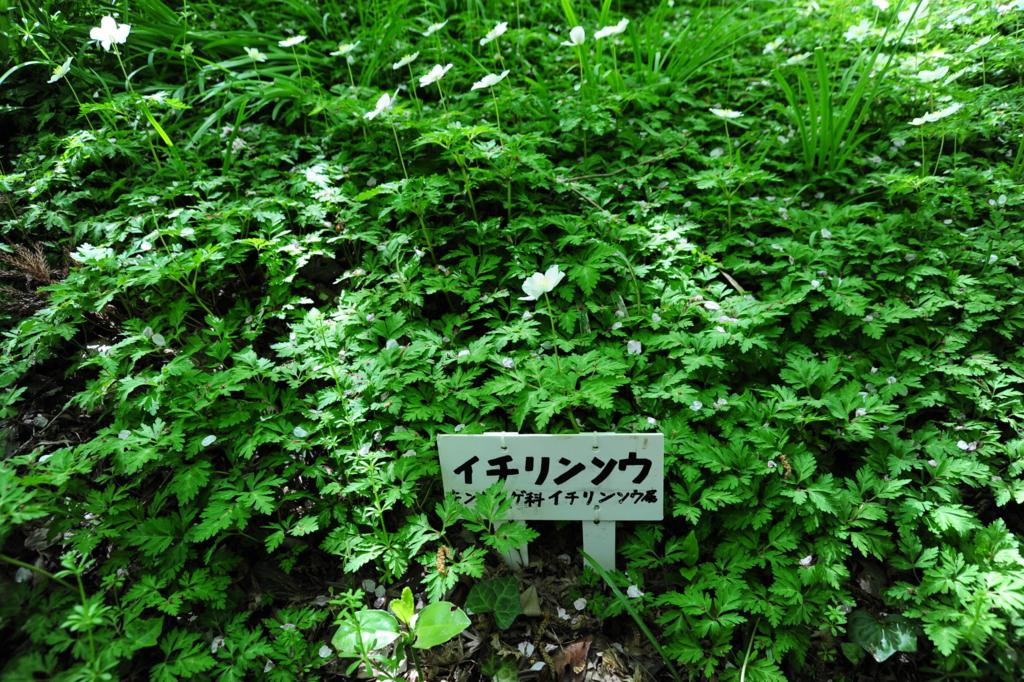 f:id:turumigawa915:20170416084534j:plain