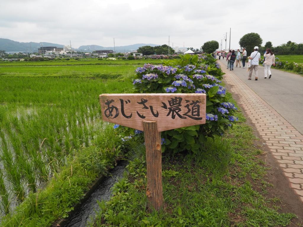 f:id:turumigawa915:20180619222114j:plain
