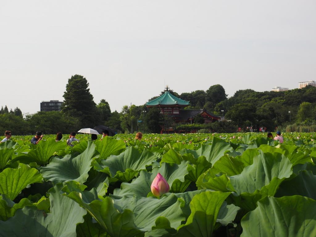 f:id:turumigawa915:20180724234113j:plain