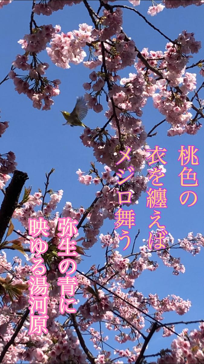 f:id:tuyoshi1101:20200310121631j:plain