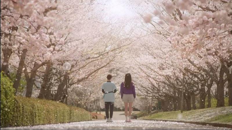アンサングシンデレラ #1 桜並木