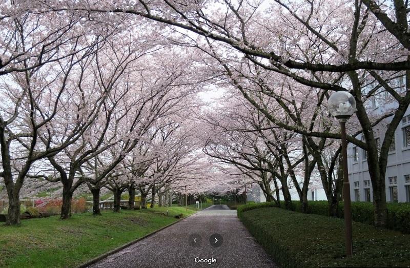 アンサングシンデレラ #1 桜並木 川村学園女子