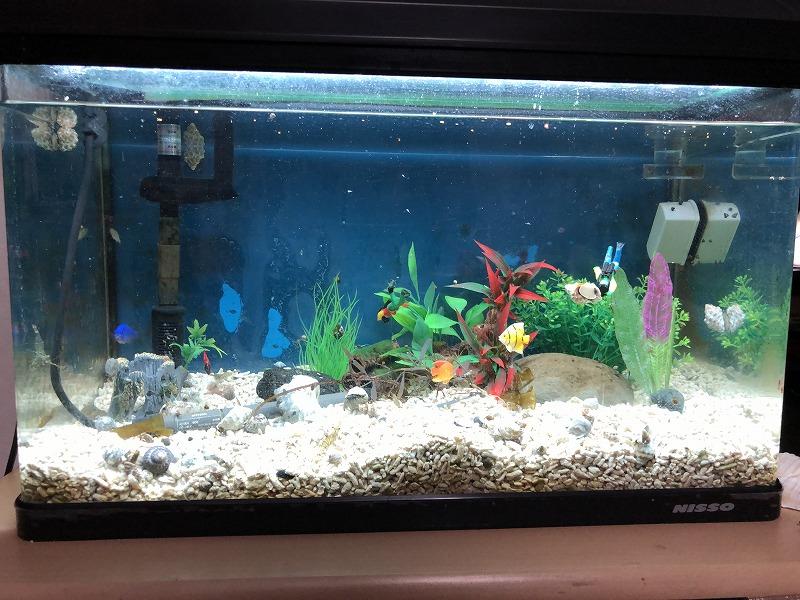 海水魚 水槽