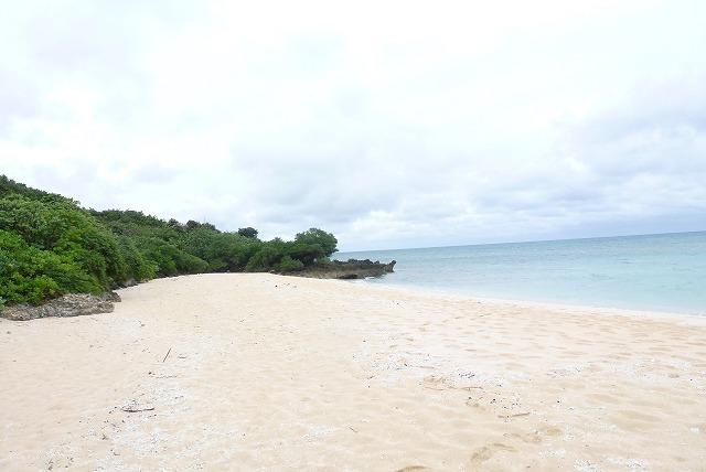 浜シタン群落 ビーチ