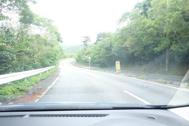 県道215 ヤマネコ注意