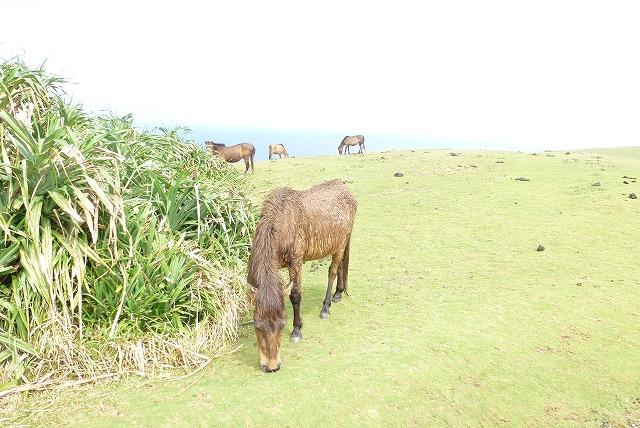 与那国島 東崎 馬