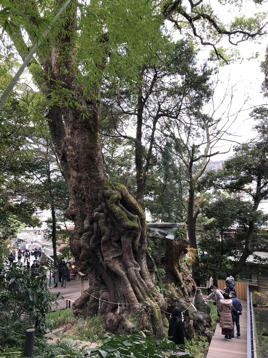 熱海 來宮(きのみや)神社 天然記念物『大楠』