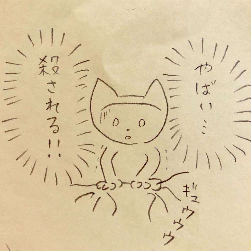 f:id:twinklesachiko:20190223011729j:image