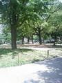 公園から講習会へ、戻りたくない。