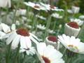 庭に花が咲いた