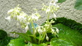 花首をもたげる山野草