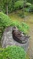 [で]ねこが庭の岩の上で寝ている