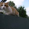 猫撮ろうとしたら逃げられた。