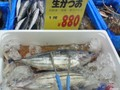 [aitqb] 40cmくらいある鰹が一尾880円