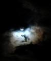 おとといのでござる。月の光って本当に青いんだなぁ