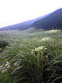 仙石原ススキ野の夏の風景