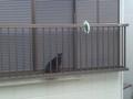 [aitqb] 巨大な黒猫