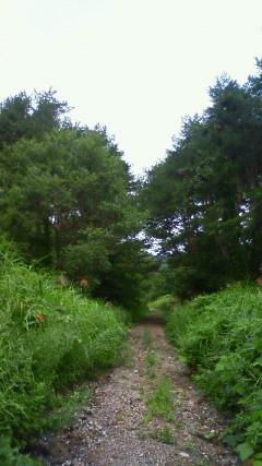 林道を徒歩で進んで行くと……。