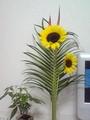 昨日買った向日葵と葉っぱに赤いツンツン草追加したら見栄え良くなっ