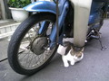 猫と蕎麦屋のスーパーカブ
