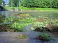 足元ぎりぎりまで水がきていてやばい。サイコロの目と賀茂川の水。