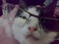 メガネをかけさせた