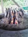 [acfnoid]釣った魚を焼いて食べた!おいしかった