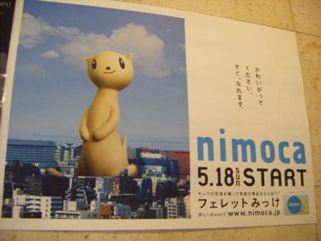 nimocaのフェレットかわいい