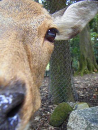 鹿ほんとうに可愛かった。みんながんばって冬を越してね。おいらも
