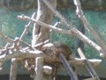 ハナジロアナグマ活動してるの見たことない。木と一体化して る。