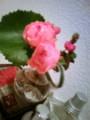 洗面所の花が開かない。蕾のまま終了するフラグか。どうした らいい