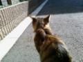猫に背を向けられてる。