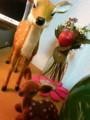 [chch]鹿さんだいすき