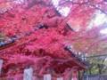 紅葉を見に来ました。なんかいいね。