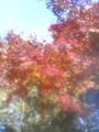 イマココ! L:東京都新宿区内藤町11 新宿御苑にいるよ!◆