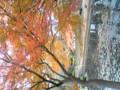 紅葉を見に小石川後楽園へ。のんびり癒されていた所、すぐ隣 に以前