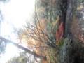 小石川後楽園に続いて六義園に来ている。メンテの粗さが上海 で見た