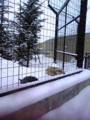 旭山動物園なう。