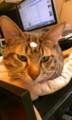 [ななん][虎徹] おでこに三つ目ネコ