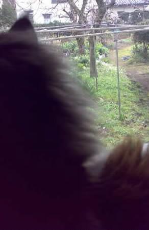 裏庭に猫。わっかんねーな。