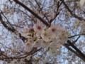 S001で桜を撮ってみた。