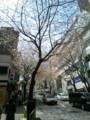 桜坂の桜は五分咲きってところですかね。