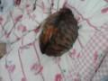 部屋に戻って電気を付けたらベッドの上に毛玉がおった!