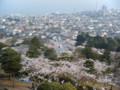 東京で花見の時期を逸したので今が見ごろの茨城県日立市まで来てみま
