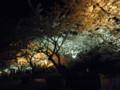 もう一か所夜桜ってる場所に寄ってみました。東海村です。