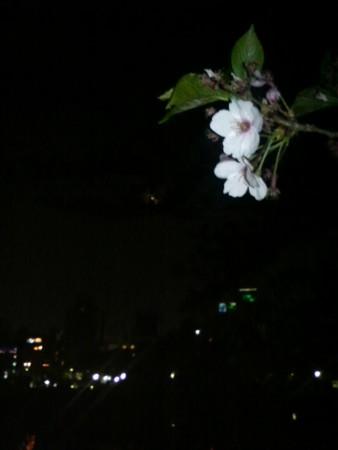 池袋より不忍通りをアップダウン  気付けば上野の池  すごいいい道!!